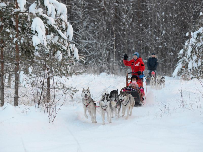 катание на собаках в карелии зимой