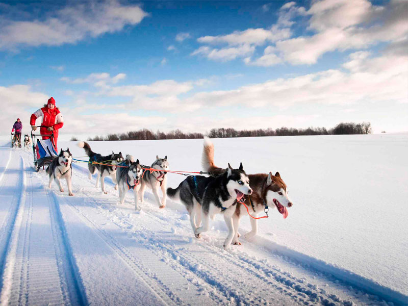 Катание на собачьей упряжке в Карелии