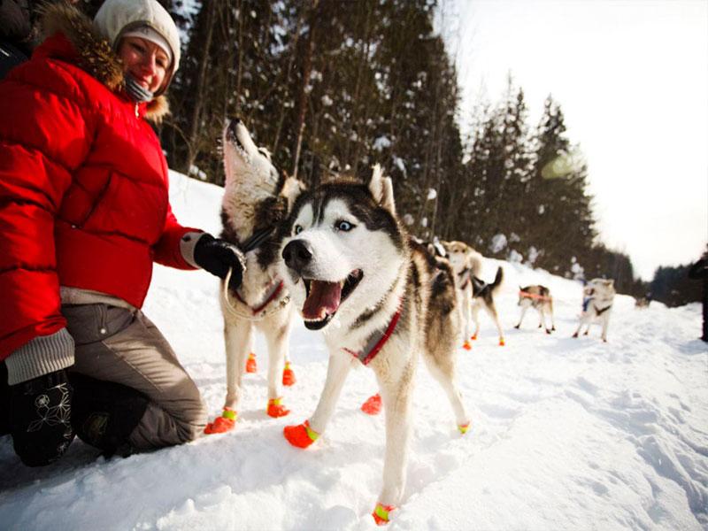 Посещение питомника ездовых собак фото