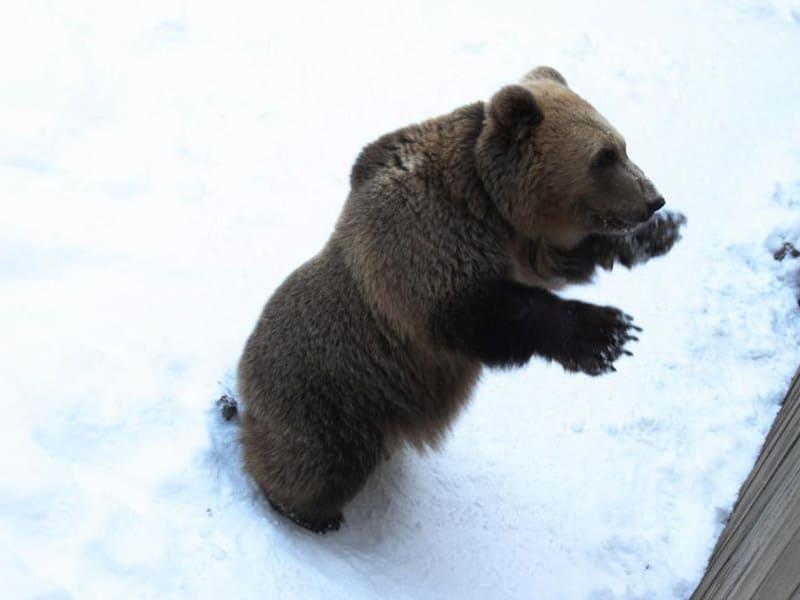 Экскурсионная программа в зоокомплекс «Три медведя»